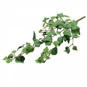 Efeuranke mit 5 Zweigen